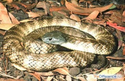самая опасная в мире змея фото