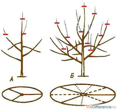 как обрезать плодовые деревья и ягодные кустарники