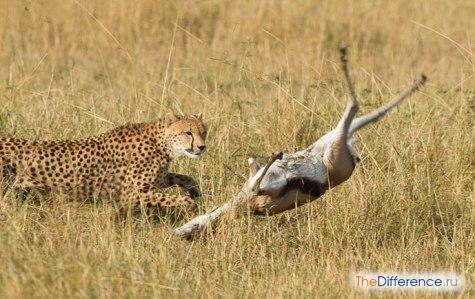 самое быстрое животное в мире фото