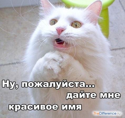 как назвать кота