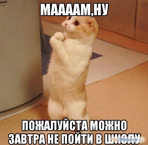 Как можно заболеть за 5 минут и не пойти в школу в домашних условиях - Belbera.Ru