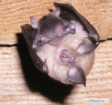 Летучая мышь с мышонком
