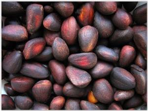 Что представляет собой кедровый орех