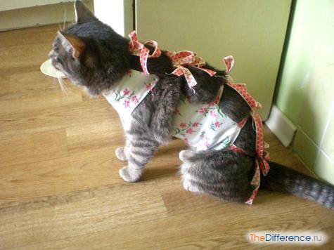 как ухаживать за кошкой после стерилизации