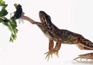 Что едят лягушки