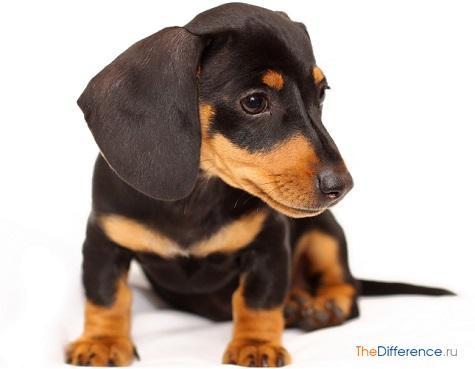 как назвать собаку