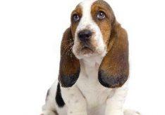 Как назвать собаку?