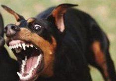 Что делать, если напала собака?