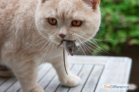 избавиться от мышей в частном доме