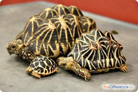 что представляет собой панцирь черепахи