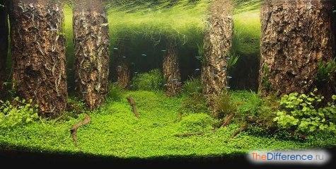 Что нужно для аквариума с рыбками