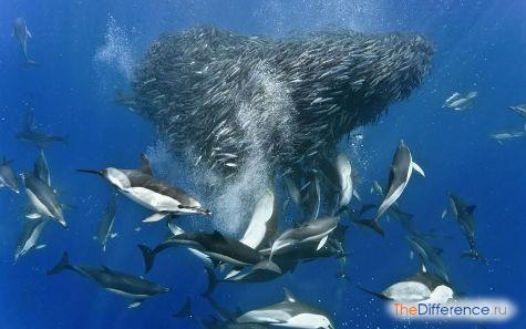 что едят дельфины в дельфинарии