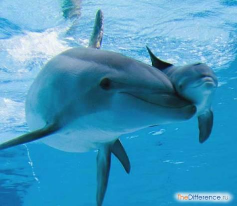 delfin-5