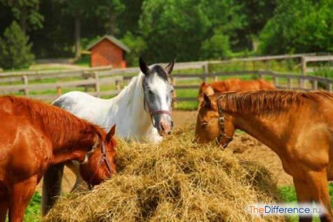 что любят есть лошади