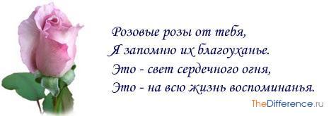 chto-oznachayut-rozovye-rozy-4