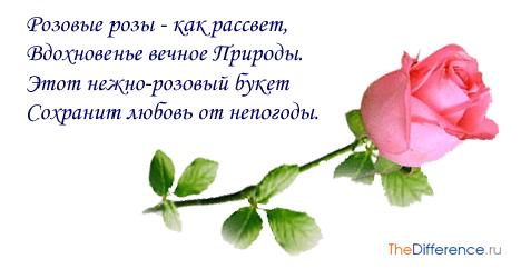 chto-oznachayut-rozovye-rozy-5