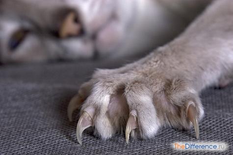 как правильно подстричь кошке когти