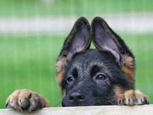 Как построить вольер для собаки? Своими руками!