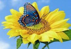 Что символизирует бабочка?