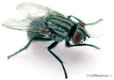 Как избавиться от мух в квартире?