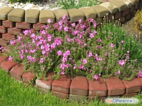 Ухоженный сад своими руками фото фото 905