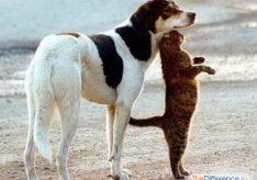 Как подружить кота и собаку?