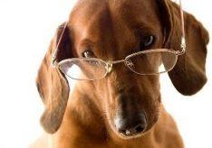 Какое зрение у собак?