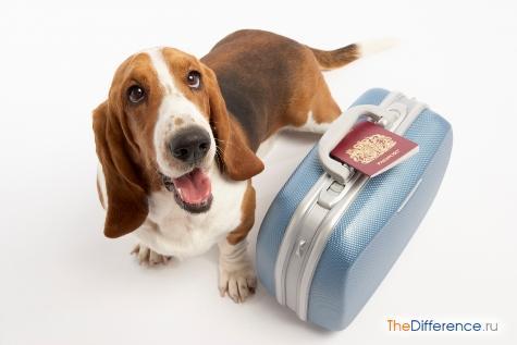 как вывезти собаку за границу