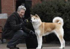 Какая порода собаки в фильме «Хатико»?