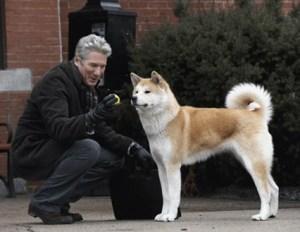 Какая порода собаки в фильме Хатико