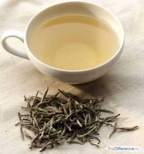 отличие зеленого чая от белого чая
