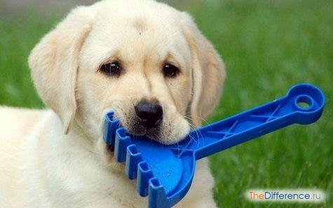 как научить собаку команде апорт