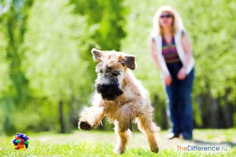 команда апорт для собак