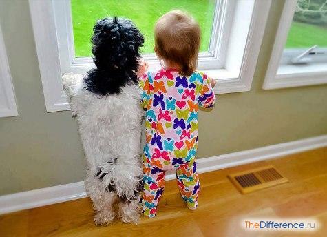 как посчитать возраст собаки по человеческим меркам