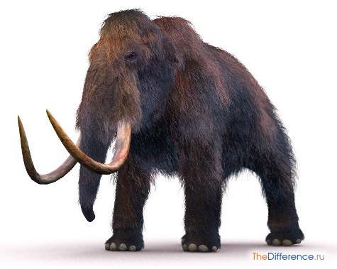 чем отличается мамонт от слона