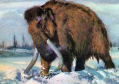 Разница между мамонтом и слоном