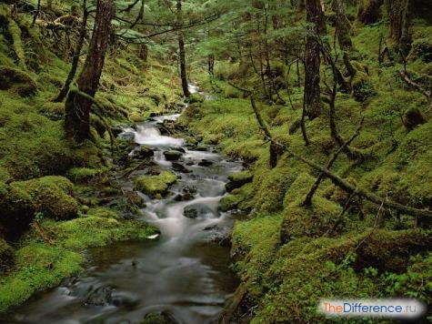 отличие реки от ручья