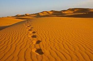 Чем отличаются барханы и дюны