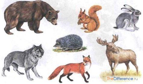 чем отличаются домашние животные от диких
