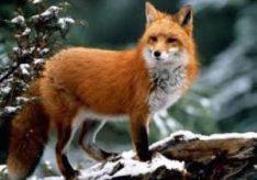 Разница между домашними животными и дикими