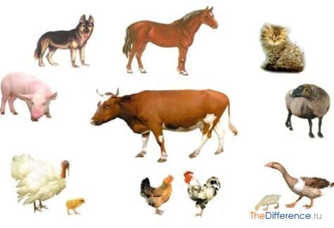 отличие домашних животных от диких