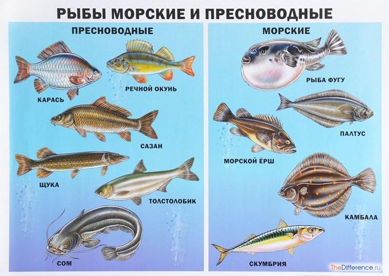 """Результаты поиска изображений для запроса """"морская рыба"""""""