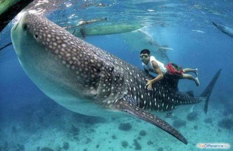 отличие морских рыб от речных