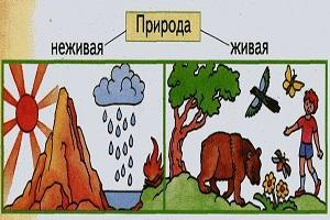 Что относится к неживой природе