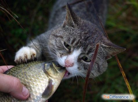 как понять что у кошки глисты