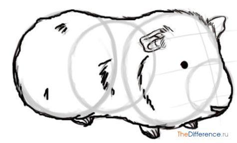 как рисовать морскую свинку