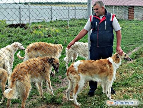 как стать заводчиком собак с чего начать