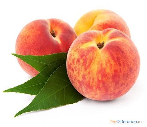 чем отличается нектарин от персика