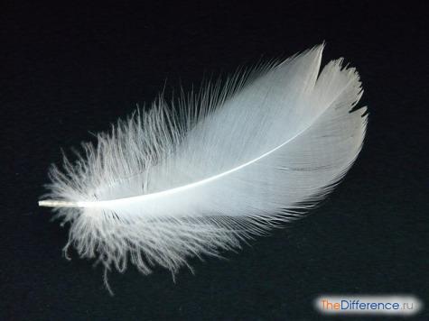 отличие пуха от пера