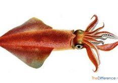 Разница между кальмаром и осьминогом